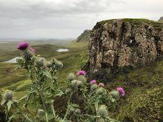 Scottish Thistles and The Quiraing, Isle of Skye
