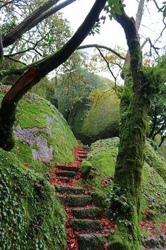 Natural stairs by Geraldo Dias on 500px-Red carpet - Penha - Guimarães
