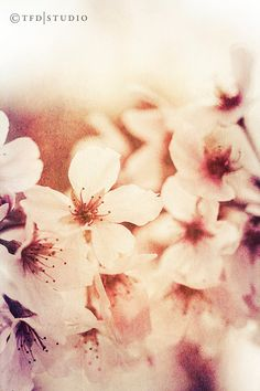 Items similar to Nature Photography - Macro - Cherry Blossoms - Fine Art on Etsy Macro Photography, Fine Art Photography, Amazing Photography, Paper Collage Art, Beautiful Artwork, Amazing Nature, Pretty Flowers, Beautiful Landscapes, Illustrations Posters