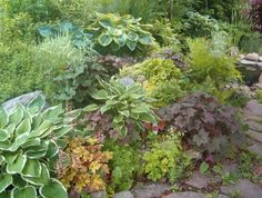 Hostas & other shade lovers.