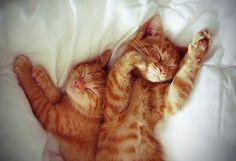 Cute, animal, cat, kitten, kitty, puss, pussy, sweet, cute, love, relationship, romance, romantic, orange, fur, furry, amazing, animals, small, bed, morning