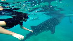 Snorkeling with whale sharks in Oslob   20 Photos of the Philippines that will make you want to pack your bags and travel © Sabrina Iovino   JustOneWayTicket.com