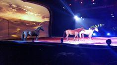 34 Best Memories, Helsinki, My Childhood, Trauma, Finland, Horses, Animals, Animales, Animaux