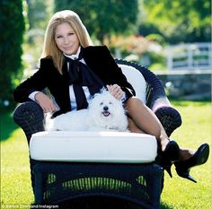 Constant companions: Barbra Steisand's pet dog Sammie, seen here in an Instagram snap with the singer last August, reportedly attacked a flight attendant this week