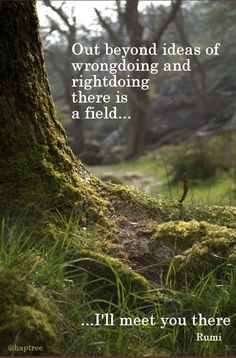 Out beyond ideas of wrong doing and right doing there is a field, I'll meet you there. - Rumi  #quotes #rumi