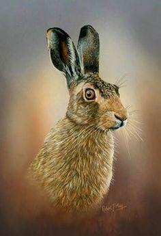 print Robert May Brown Hare Study Head '