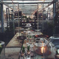 Vår gård smyckas med gamla franska fönster. Glaskupor, ljus och hyacinter. Gran och tall@zetastradgard #zetasjul