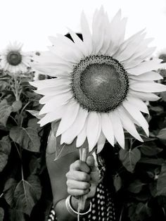 Black and white giant sun~daisy~flower for me!