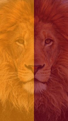Galatasaray duvar ka d sar k rm z aslan rm z k rm z - red yellow lion Ed Wallpaper, Abstract Geometric Art, Football Wallpaper, Lions, Yellow, Pictures, Painting, Sports Channel, Flower Photos