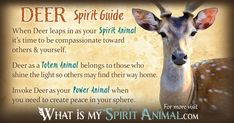 In-depth Deer Symbolism & Deer Meanings! Deer as a Spirit, Totem, & Power Animal. Plus, Deer in Celtic & Native American Symbols & Deer Dreams!
