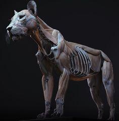 Lion anatomy by Maria Panfilova Lion Anatomy, Animal Anatomy, Anatomy Study, Anatomy Art, Anatomy Reference, Human Anatomy, Art Reference, Animal Sculptures, Lion Sculpture