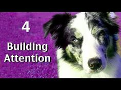▶ Building attn game 4- clicker dog training tricks - YouTube by Kikopup