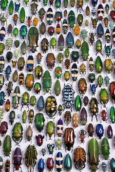 The Beatles by Scott Lewis: Karlsruhe Museum of Natural History #Beetles #Photography