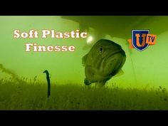 Soft Plastic Finesse Fishing