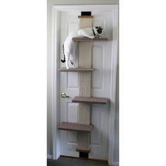 cat tree/scratching post that attaches to any door; reasonably priced compared to traditional (ugly, monstrous, carpeted) trees. Something to think about at least...