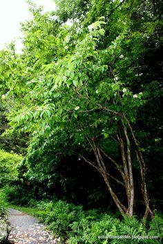 A Charlotte Garden: boone