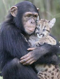 Love Between Animals