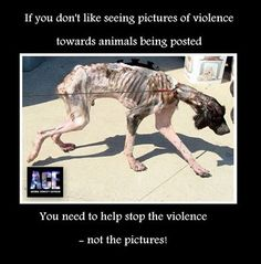 animal abusers - Google Search