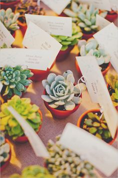 Potted succulent escort cards and favors. Captured By: Elyse Hall Photography ---> http://www.weddingchicks.com/2014/06/02/desert-wedding/