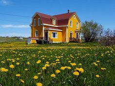 A gorgeous scene of yellow on yellow in the Magdalen Islands #Quebec