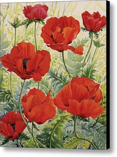 Large Red Poppies Canvas Print / Canvas Art By Christopher Ryland