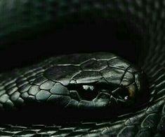 Loki Aesthetic, Dark Green Aesthetic, Slytherin Aesthetic, Slytherin Pride, Slytherin House, Hogwarts Houses, Draco Malfoy Aesthetic, The Villain, Aesthetic Wallpapers
