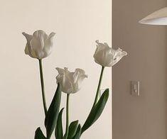 white aesthetic light korean soft minimalistic kawaii cute korean g e o r g i a n a : a e s t h e t i c s Cream Aesthetic, Flower Aesthetic, Aesthetic Photo, Aesthetic Pictures, Aesthetic Light, Feeds Instagram, Style Instagram, Foto Pose, My Flower
