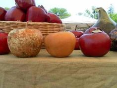 http://birmingham.patch.com/articles/from-the-farmers-market-turning-gourds-into-art