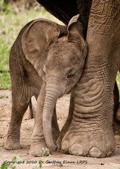 ~~Tanzania: Are we there yet Mum? by geoff-e ~ baby elephant~~