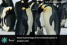 #penguins #Antarctica #facts