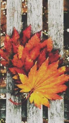 Beautiful phone wallpaper for fall
