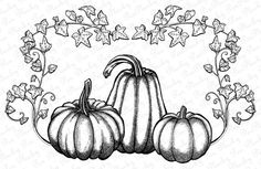 Fall Drawings, Outline Drawings, Colorful Drawings, Doodle Drawings, Pumpkin Coloring Pages, Fall Coloring Pages, Pumkin Drawing, Vine Drawing, Drawing Flowers