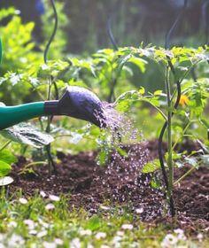 Bird Feeders, Garden, Outdoor Decor, How To Make, Garten, Lawn And Garden, Gardens, Gardening, Outdoor