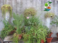 Wall Decors By gardening