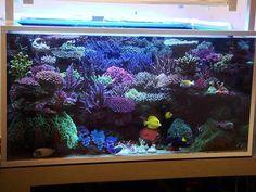 Carlinhos Moreno's 980L (252 US-gallon) Reef Aquarium