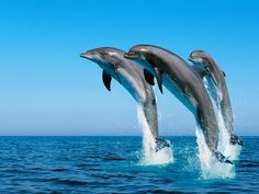 Imagenes De Naturaleza Gratis Para Protector De Pantalla 8 HD Wallpapers