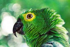 green parrot hd
