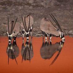 Mooi plaatje Namibie