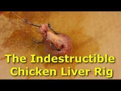 This is a great way to make your chicken liver (or other catfish bait) indestructible. You'll never lose anymore chicken liver while casting or from small fish stealing it. The stinger rig and Surgitube gauze make a bulletproof combination when fishing for catfish with chicken liver.  A special thanks to Steve Douglas of www.discovercatfishing.com for the idea behind this rig.   For more great catfishing tips and tricks check out www.CatsandCarp.com