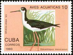 Black-necked Stilt stamps - mainly images - gallery format