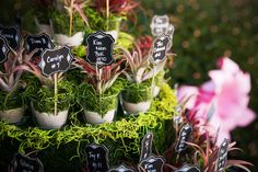 Garden Inspired Guest Table Number Table Potted Plants with Chalkboard Signs | Mid-Summer