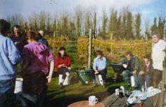 Oatley Vineyard, Somerset, UK. Kernling harvest Oct 2002