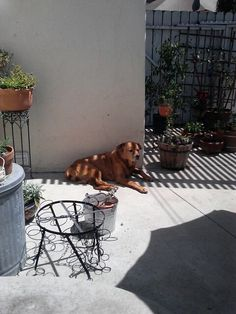 Chiona loves the sunshine.