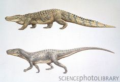 Crocodile and Euparkeria--separated by 250 million years.