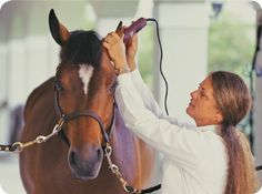 Grooming and Clipping Tips including Tips for Working on the Nervous Horse and Clipper Care