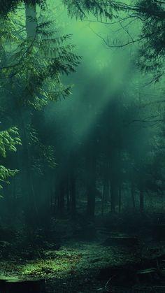 Forest Wallpaper Iphone, Green Nature Wallpaper, Lit Wallpaper, Beautiful Nature Wallpaper, Galaxy Wallpaper, Xperia Wallpaper, Cellphone Wallpaper, Forest Landscape, Fantasy Landscape