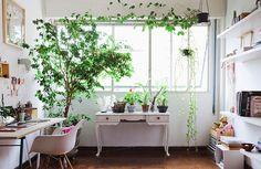 Home office iluminado, com estação de trabalho, estante e muitas plantas.