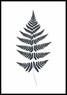 Fern, poster. Sort-hvid plakat. Plakat med sort-hvid bregne på hvid baggrund. Enkelt og stilrent motiv som passer både til hjemmet og arbejdspladsen. Fin og interessant detalje på en billedvæg. Posters og plakater. www.desenio.dk