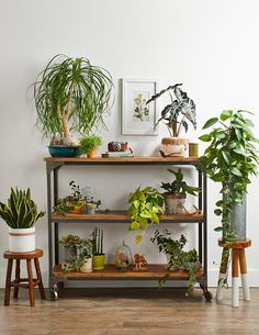 Up Your Decor With Lush Houseplants Learn the best ways to arrange and care for houseplants so you can be a indoor gardening expert.Learn the best ways to arrange and care for houseplants so you can be a indoor gardening expert. Diy Zimmer, Decorating Bookshelves, Peace Lily, Style Deco, Decoration Inspiration, Design Inspiration, Decorating Coffee Tables, Indoor Plants, Indoor Gardening