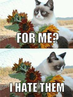 Grumpy Cat hates flowers
